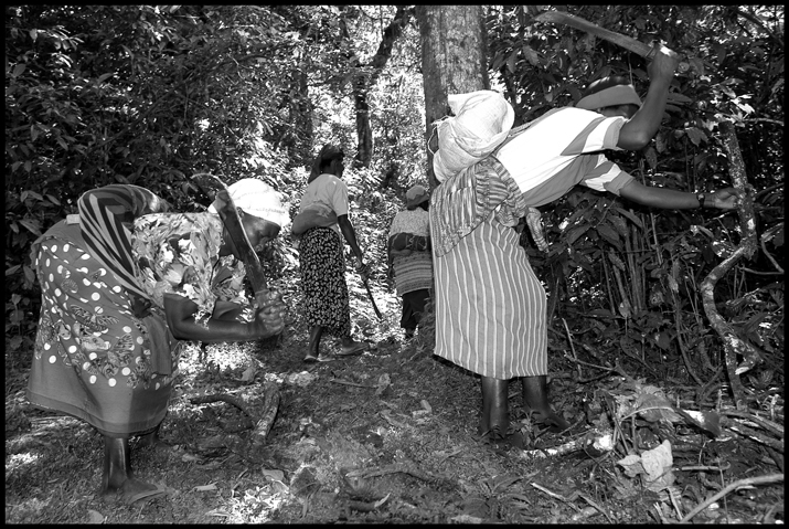 Women cutting firewood.