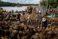 Vietnamese factory workers load wire baskets with coconut husks