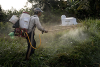 A worker sprays herbicidal grass killer